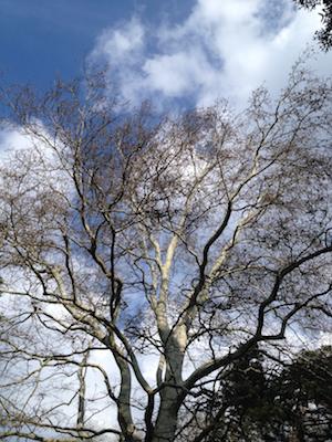 Bäume im Türkenschanzpark